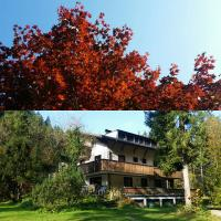 Auberges de jeunesse - The Treehouse Backpacker Hostel